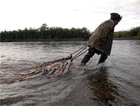 Ямальский рыбный инспектор терроризировал общину КМНС